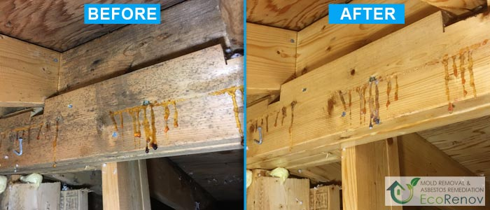 Attic Mold Removal in Montreal (Before/After #3)