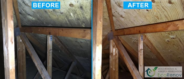 Attic Mold Removal in Montreal (Before/After #4)