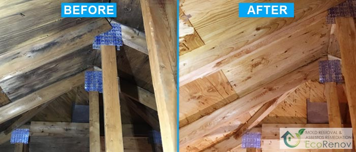 Attic Mold Removal in Montreal (Before/After #7)