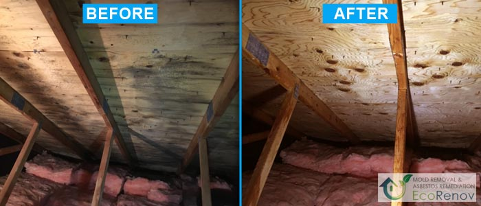 Attic Mold Removal in Montreal (Before/After #8)