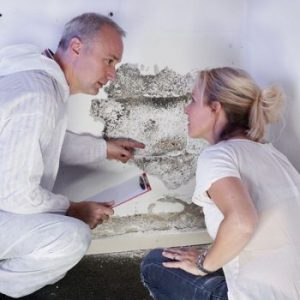 Mold Inspection, Mold Testing, Mold Removal and Mold Certification services