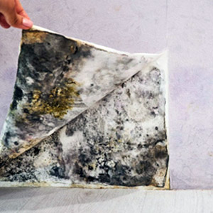 Mold Remediation in Montreal & Laval