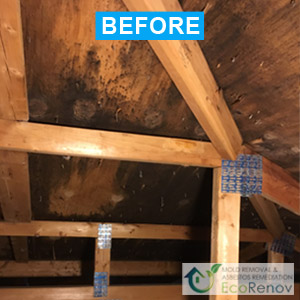 Mold Removal Blainville (Before)