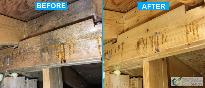 Mold Removal, Laval (Before/After)