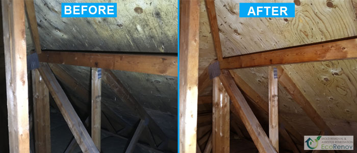 Mold Removal, Montreal (Before/After)