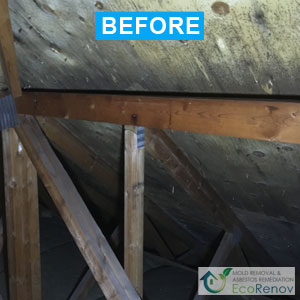Mold Removal, Montreal