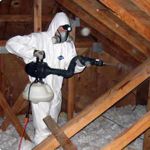 Mold Removal & Mold Remeditation