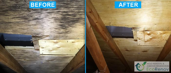Mold Removal, Terrebonne (Before/After #12)
