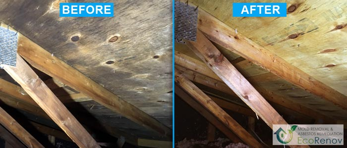 Mold Removal, Terrebonne (Before/After #13)