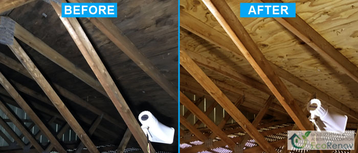 Mold Removal, Terrebonne (Before/After)