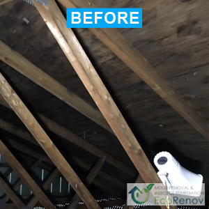 Mold Removal, Terrebonne (Before)