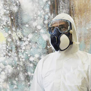 Mold Removal, Montreal & Laval