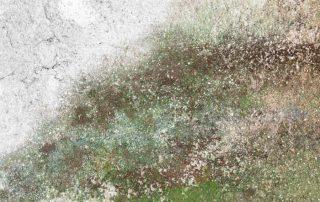 Moisissures vertes dans la maison (mur, tapis, béton, etc.)