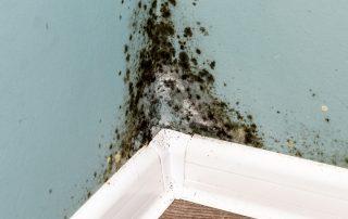 Identification des foyers de moisissures