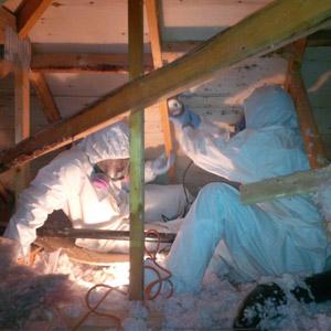 Travaux, enlèvement de moisissure dans un entre-toit